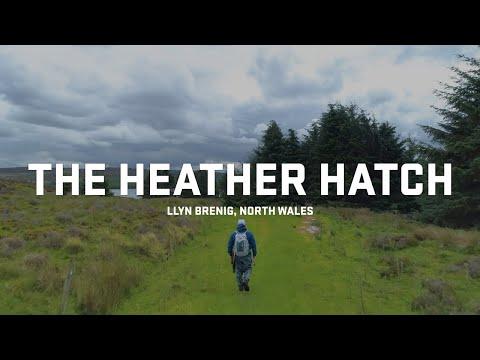 The Heather Hatch - DRY FLY FISHING HEAVEN | Llyn Brenig North Wales