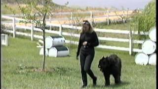 K-9 Companions Dog Training Co. (competitive Level Obedience Training)