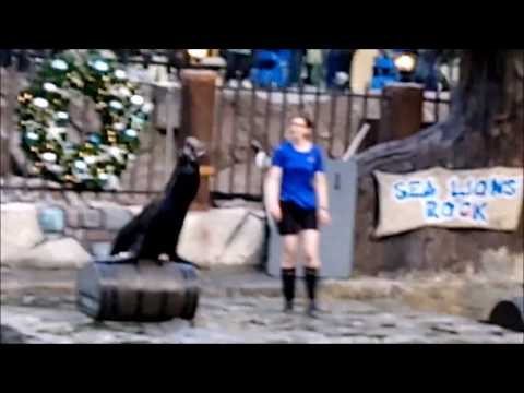 West Edmonton Mall - Marine Life - Sea Lion show part Two | Alberta Edmonton