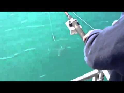 Orca assassina ruba il pesce di un pescatore