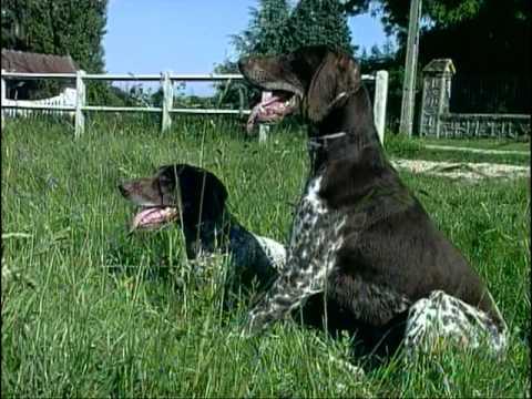 Les chiens de chasse : Personnalité, Origine, Hygiène, Santé, Alimentation, Education