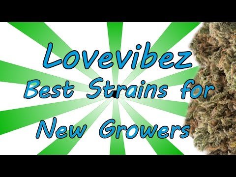 Best Cannabis Strains for New Growers