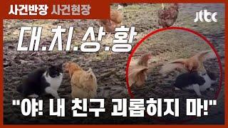 """""""저리 못 가?!"""" 겁 없이 달려든 암탉들…고양이 '쭈굴' / JTBC 사건반장"""