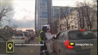 Огромного кота тормознули гаишники в Краснодаре