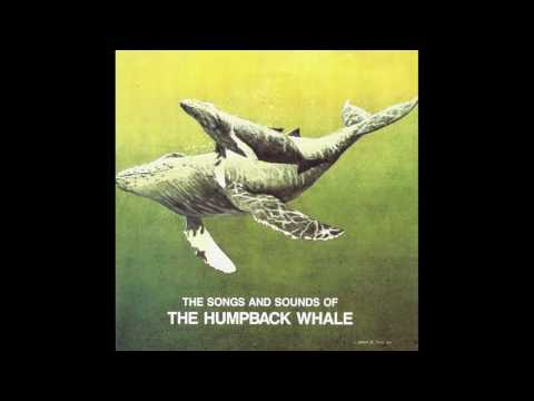 SOUNDS OF THE HUMPBACK WHALES (excerpt)