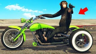 Monkey Does a Drive-by! (GTA RP)