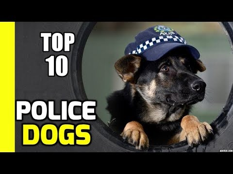 Top 10 Police Dogs in the World