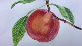 How To Draw A Peach- Vintage Arts By Firuza