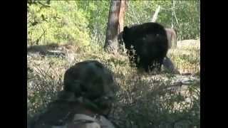Медведь vs человек. Опасное видео!