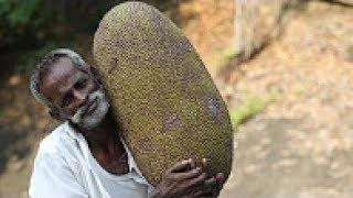 شاهد الطباخ الهندي الشهير يحضر اغرب واكبر فاكهة في العالم -متع نظرك