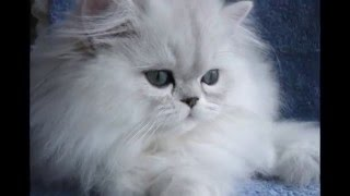 Котята милашки популярные фото!!!Kittens cute popular photo!!!
