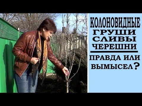 Как ухаживать за колоновидными плодовыми деревьями