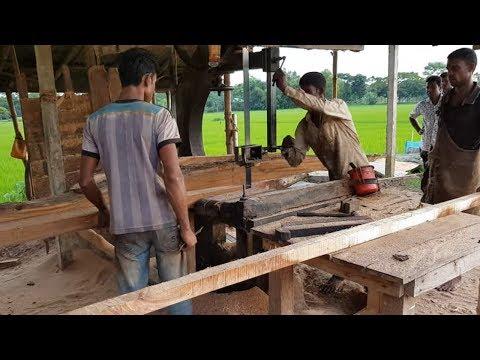 Kauri Tree Wood Board Cutting in Sawmill Craftsman।Agathis Australis Board Cutting in Sawmill World