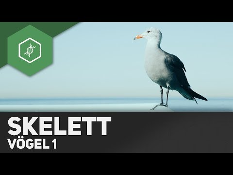 Vögel - Skelett ● Gehe auf SIMPLECLUB.DE/GO & werde #EinserSchüler