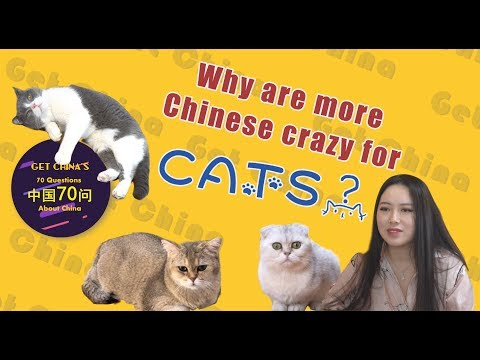 Why are more Chinese crazy for cats?