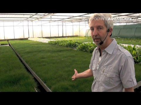 Visit to Dennerle greenhouses - part 1