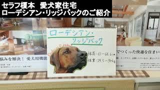 みなさん、こんにちは。セラフ榎本愛犬家住宅です。 今回の犬種のご紹介...