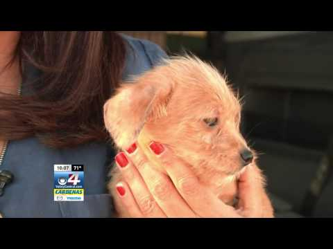 Non-Profit Organization to Transport Stray Dogs Out Of The Valley