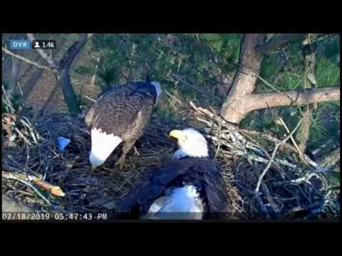 Two Pips - Dad Delivers Partially Eaten Fish - Berry College Eagles - Feb 18, 2019