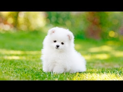 How To Pick The Right Dog For You Puppy Care Youtube