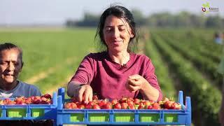 Küppers Erdbeeren Holzbüttgen  Hofmarkt  Gutes genießen in Kaarst   Äpfel Erdbeeren Spargel