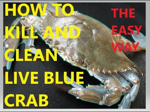 HOW TO KILL, AND CLEAN BLUE CRABS.... THE EASY WAY
