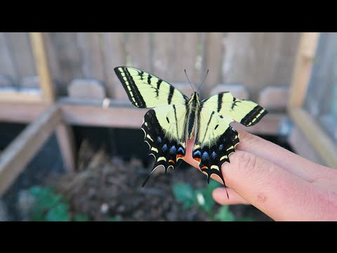 I SAVED A BUTTERFLY || Vlog_4