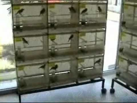 a0f7304f318 Pet shop Monkeys Thessaloniki - YouTube