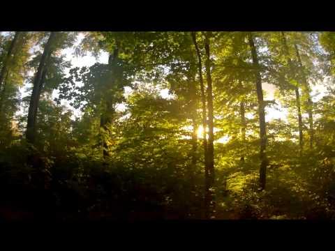 Bon Iver - Woods (Music Video)