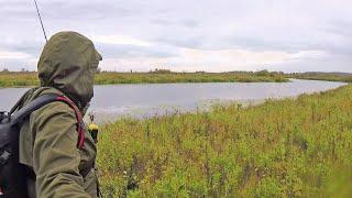 Нашёл ТИХОЕ ОЗЕРО, А ТАМ НАСТОЯЩИЙ ЩУЧИЙ ЖОР! Рыбалка на спиннинг осенью. Блесна и Воблер косят щук!