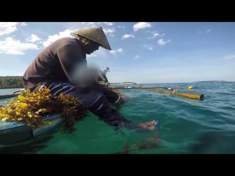 2017 world oceans day senti