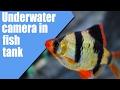 Underwater camera in fish tank | Подводни снимак акваријума | Eken H9