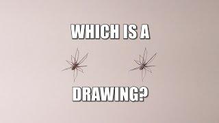 Spider Drawing Challenge