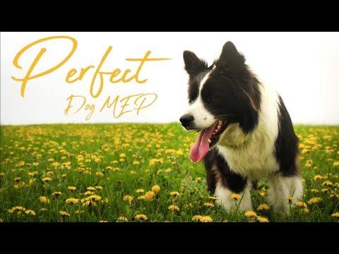 DOG MEP ♡ Perfect ♡ (Lyrics Project) [30/50] Done
