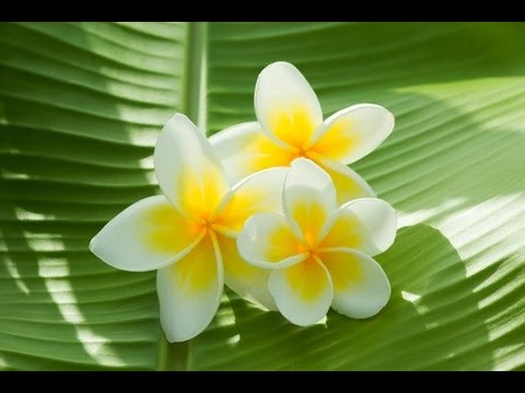 Reiki Music: Spiritual Healing Music; Holistic Music; Reflexology Music ; Aromatherapy music; 💜