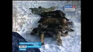 Возле детской площадки убиты девять собак