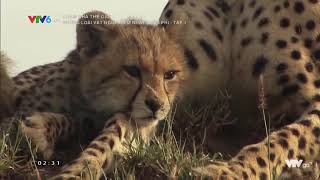(Thuyết Minh) Thế Giới Động Vật Hoang Dã 2020 | Những Loài Vật Nguy Hiểm Nhất Châu Phi