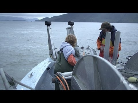 Commercial Salmon Fishing - Prince Rupert, BC