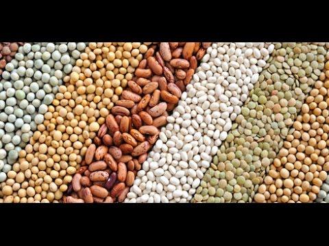 Пища Богов  - Тайны бобовых культур  фасоль, горох, бобы. Интересные факты!