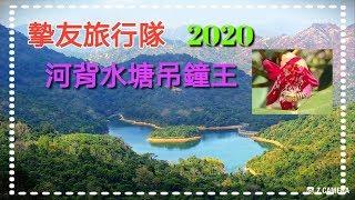 河背水塘吊鐘王~摯友旅行隊2020