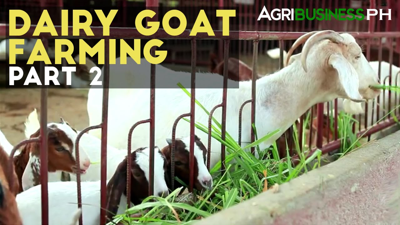 goat faming Complete line of goat supplies, home dairy, cheesemaking and more.