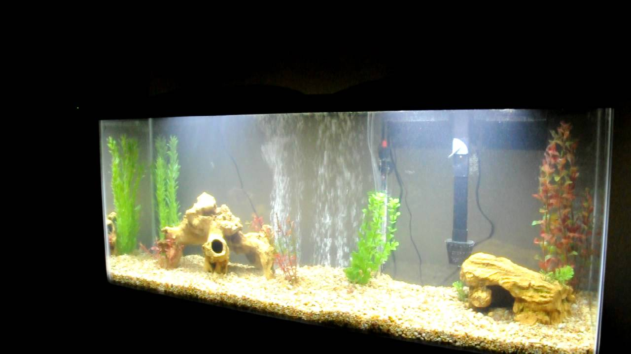 Marineland 55 gallon aquarium w led hood kit youtube mozeypictures Image collections