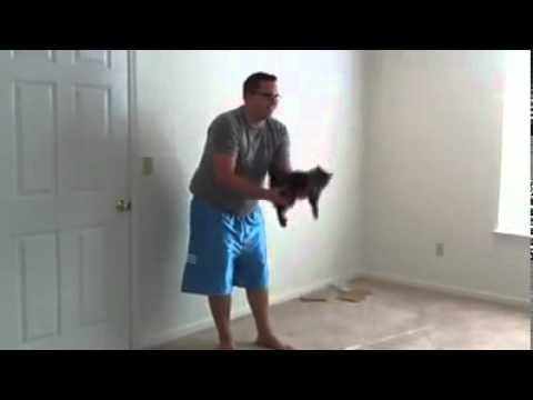 un chat qui aime se faire jeter sur le lit by jony group youtube. Black Bedroom Furniture Sets. Home Design Ideas