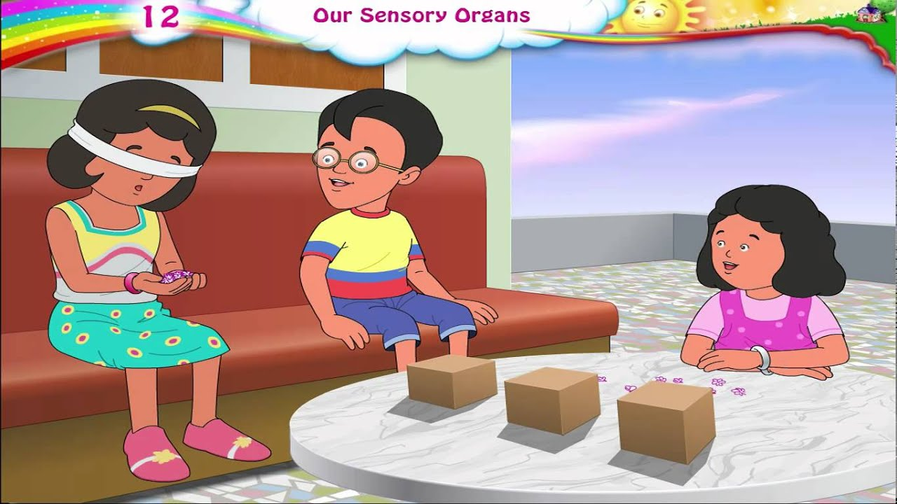 Sensory Organs For Kids | Sensory Organs And Their Functions | Five 5 Senses  | Science | Grade 3 - YouTube
