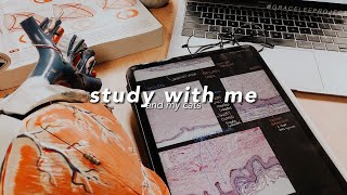 STUDY WITH ME and my Cats 😽Pomodoro 🔥Fireplace sounds