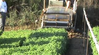 Macchine agricole yanmar for Trincia zanon prezzi