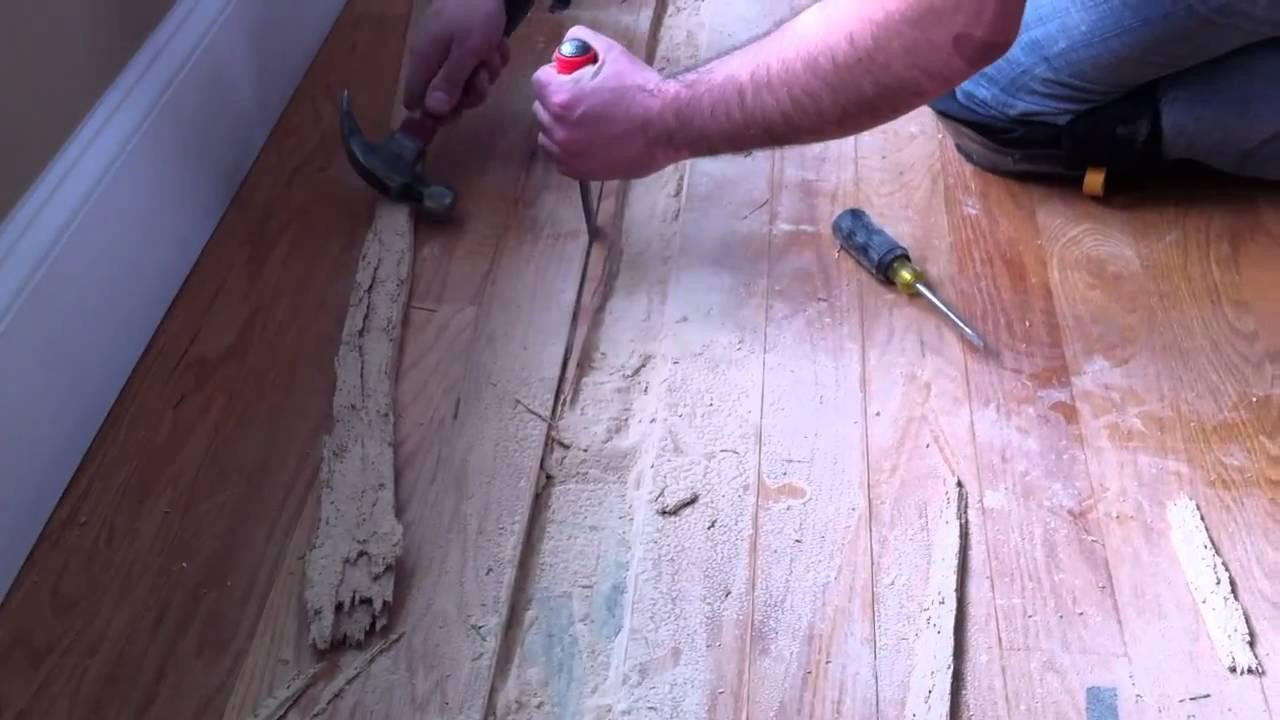 Powder Post Beetle Hardwood Floor Damage - YouTube