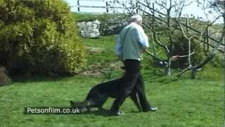 Godt Dog Obedience Training 4   Www.petsonfilm.co.uk  Production