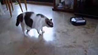 La gata Mina ataca al aspirador.