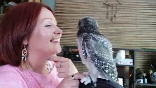 Зоолог Марина и совёнок Ива. Специально для фанатов